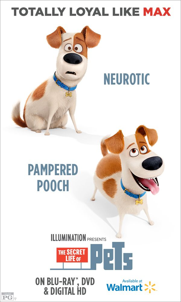 Pin By The Secret Life Of Pets On Tajnaya Zhizn Domashnih Zhivotnyh In 2020 Secret Life Of Pets Secret Life Pets