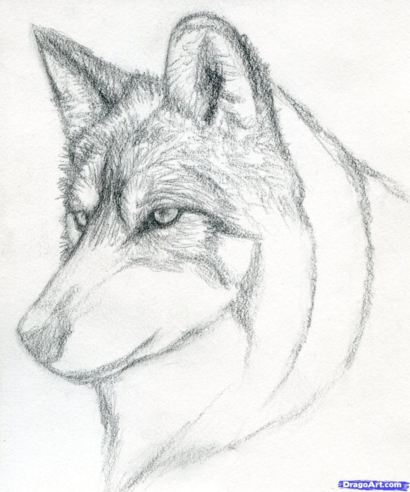 How To Draw A Wolf Head Mexican Wolf By Finalprodigy Com Imagens