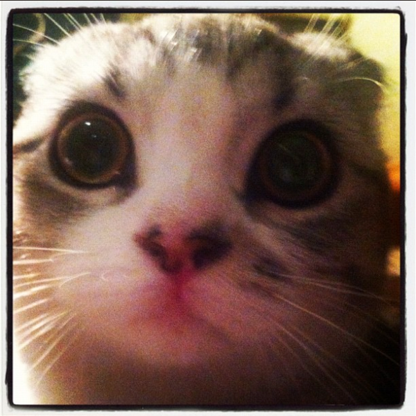 MEREDITH!!!!! The cutest cat in the entire world!!!!!