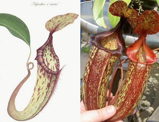 식충 식물에 대한 이미지 검색결과