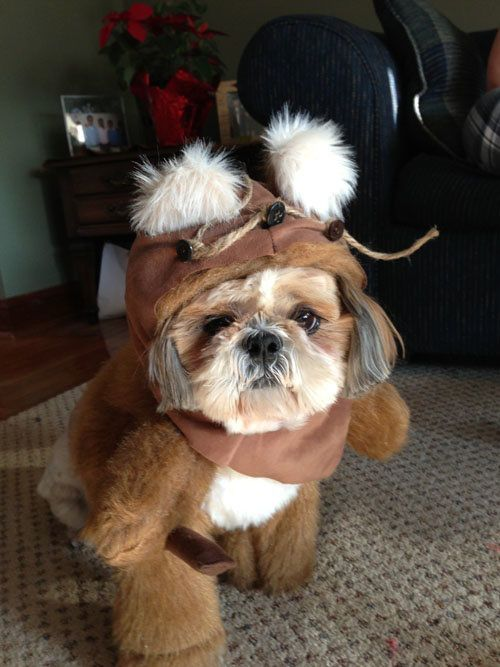 ewok dog costume shih tzu ewok or shih tzu the dog park pinterest ewok and dog 6214