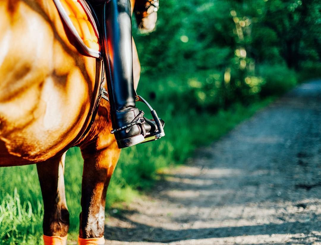 Focus on the details  . . . // Horse and otherness
