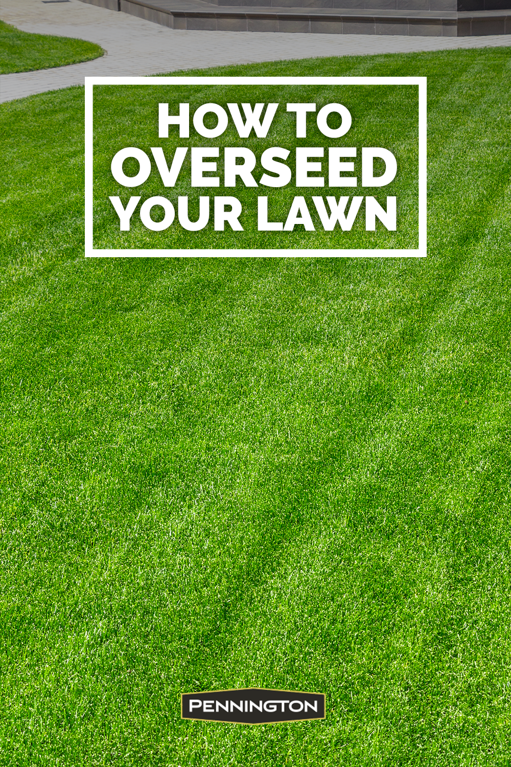 How To Overseed Or Reseed Your Lawn In 2020 Backyard Landscaping Designs Lawn And Landscape Garden Yard Ideas