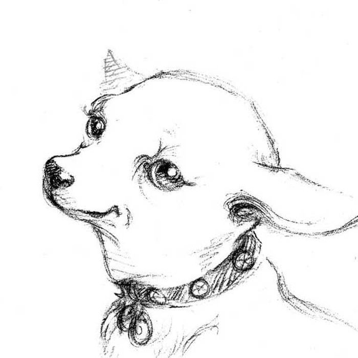 Coloring Book Pages Long Haired Chihuahua In 2020 Dog Coloring Page Puppy Coloring Pages Animal Coloring Pages