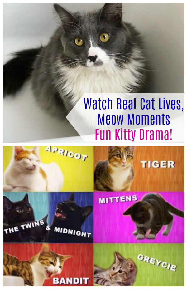 Watch Real Cat Lives, Meow Moments Fun Kitty Drama