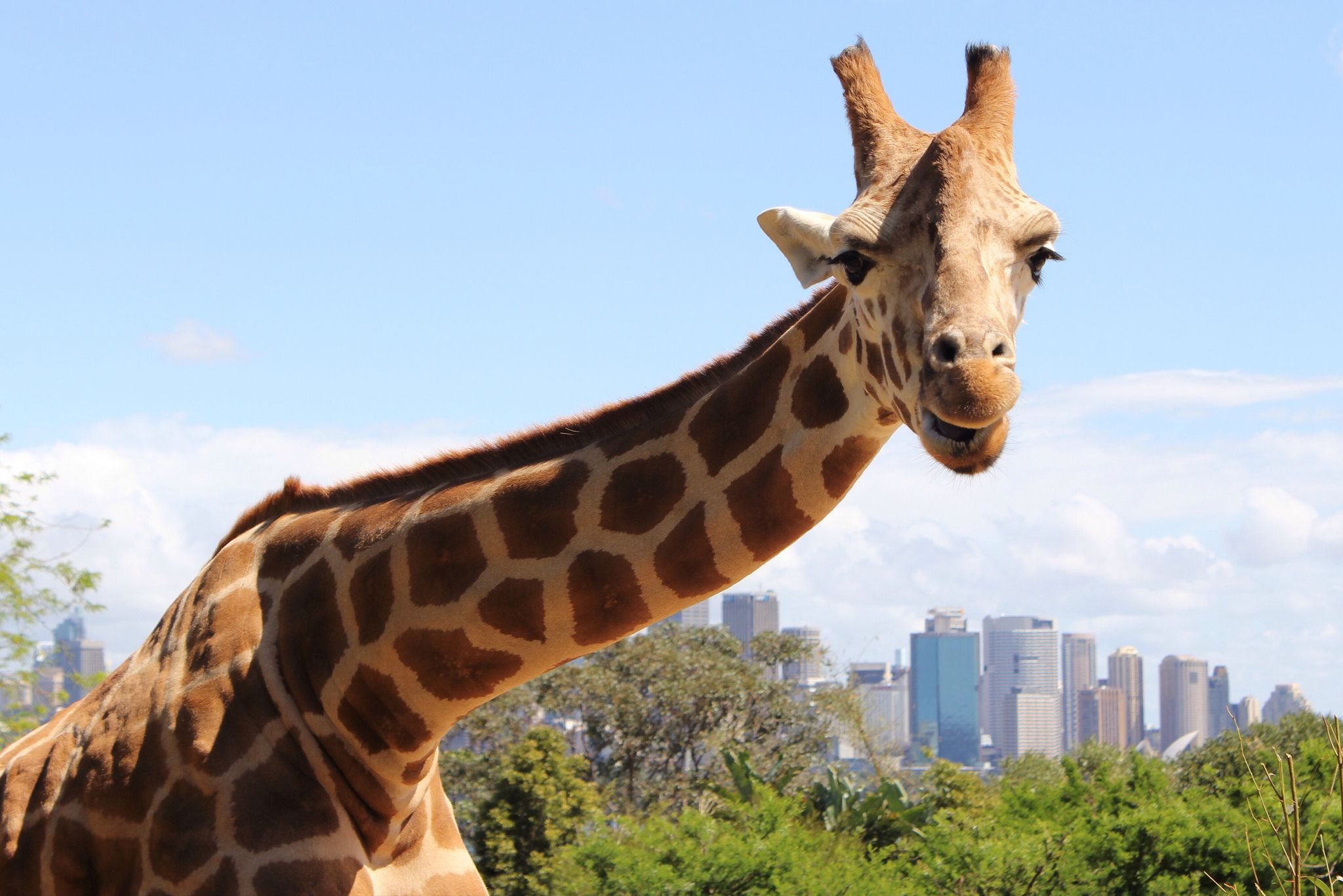 Top Things To Do In Sydney In Days Sydney Days Travel - 10 things to see and do in sydney australia