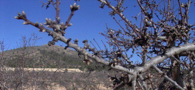 Tratamientos para árboles frutales