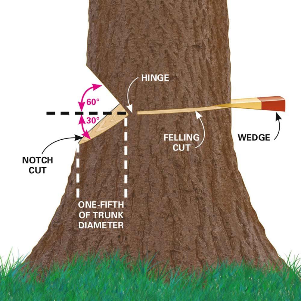 how to get a tree to fall where you want