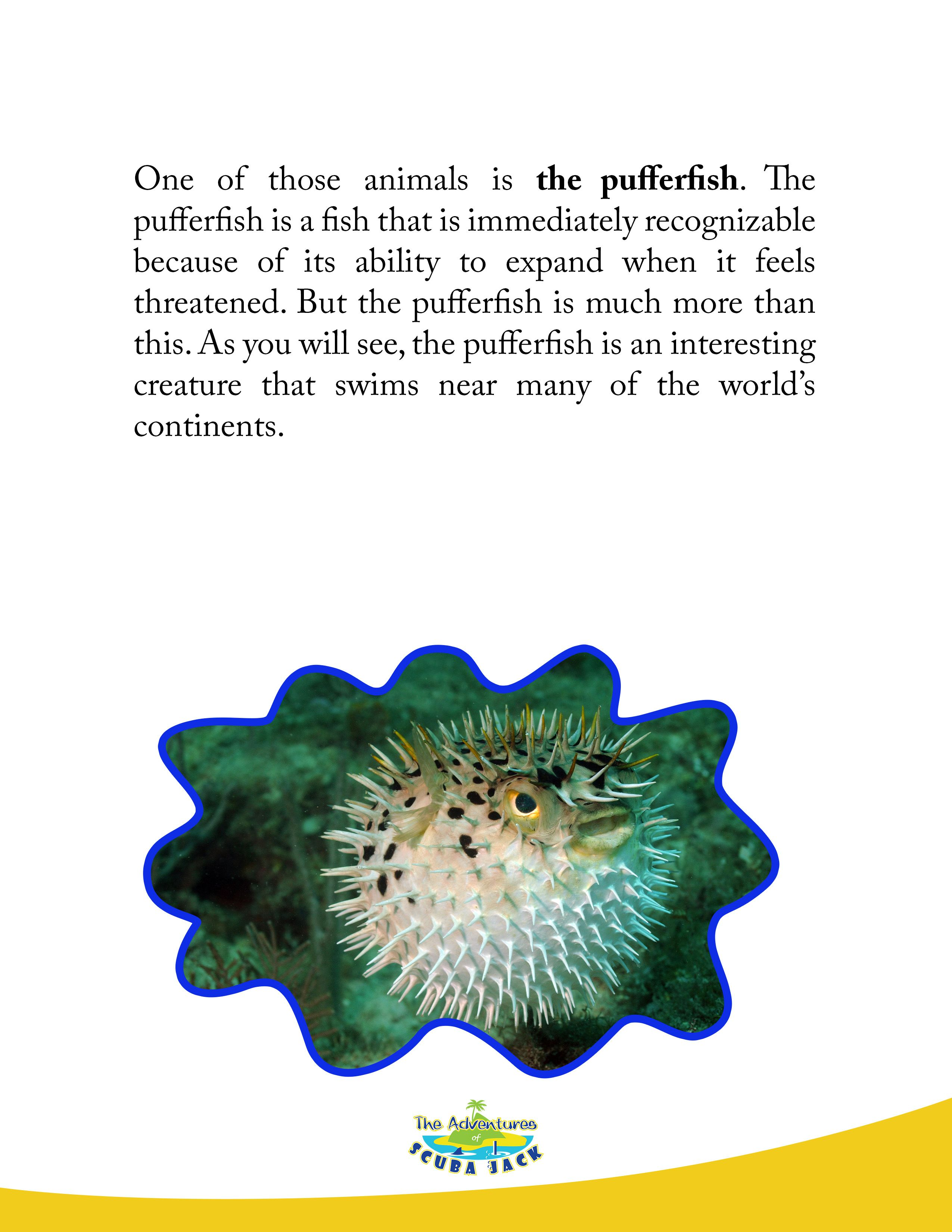 Puffer Fish In