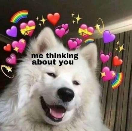 Top 28 Dog Memes Reaction Cute Love Memes Love Memes Cute Memes