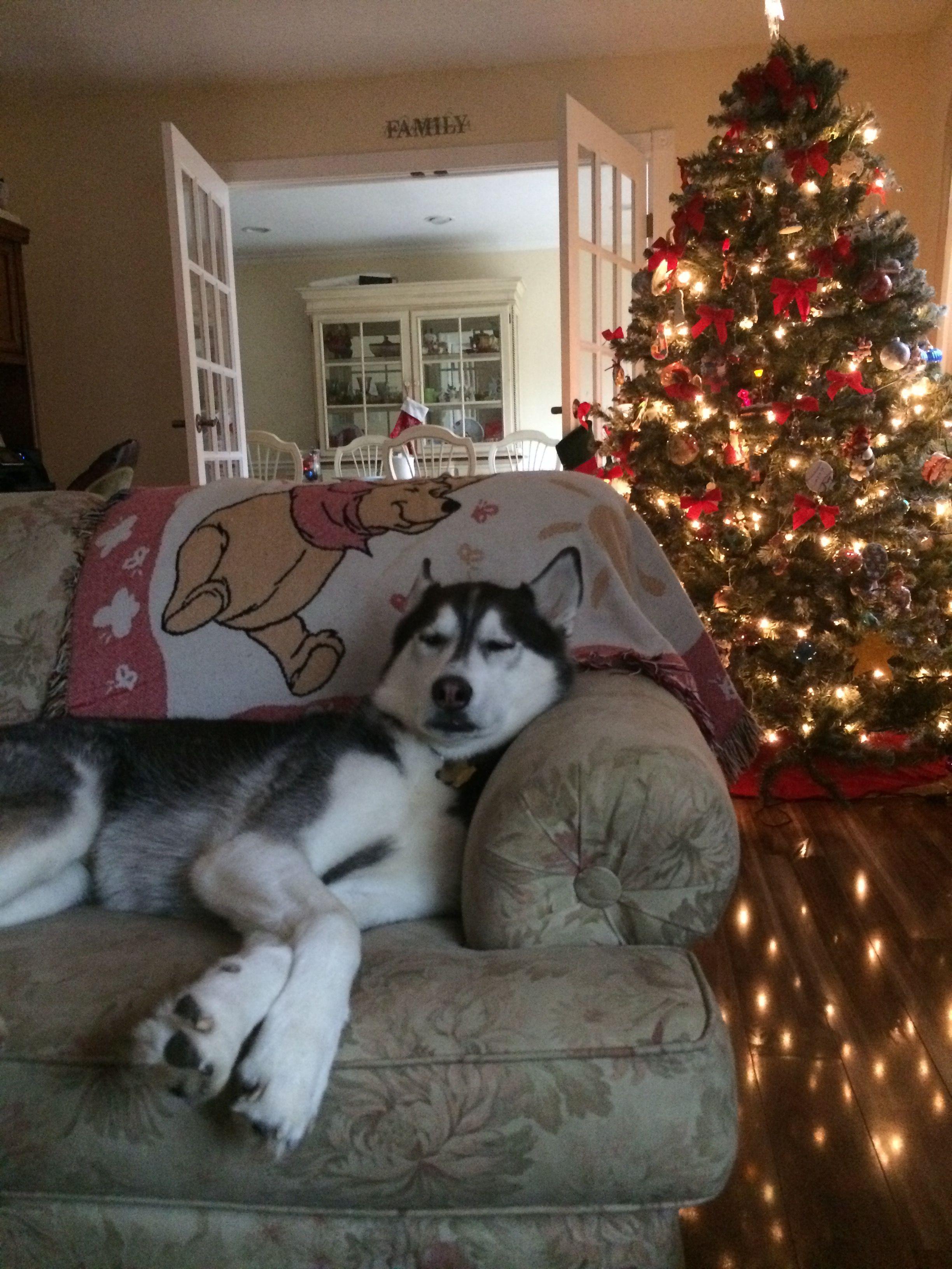 Beau, Christmas 2016