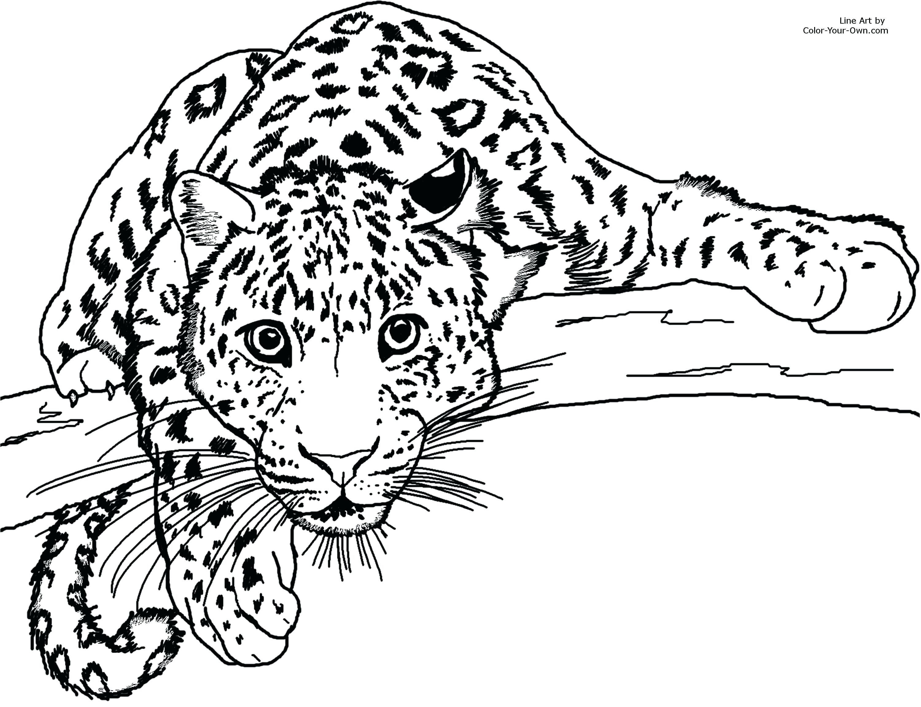 Animal Jam Coloring Pages Best Of Snow Leopard Coloring Sheet