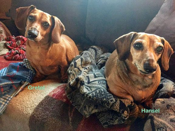 Adoptable Dachshunds In Southern California California Doxies