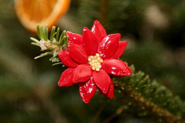 bilder aus kuerbiskernen mit kindern basteln, weihnachtsstern basteln mit kindern weihnachtsbaum deko, Design ideen