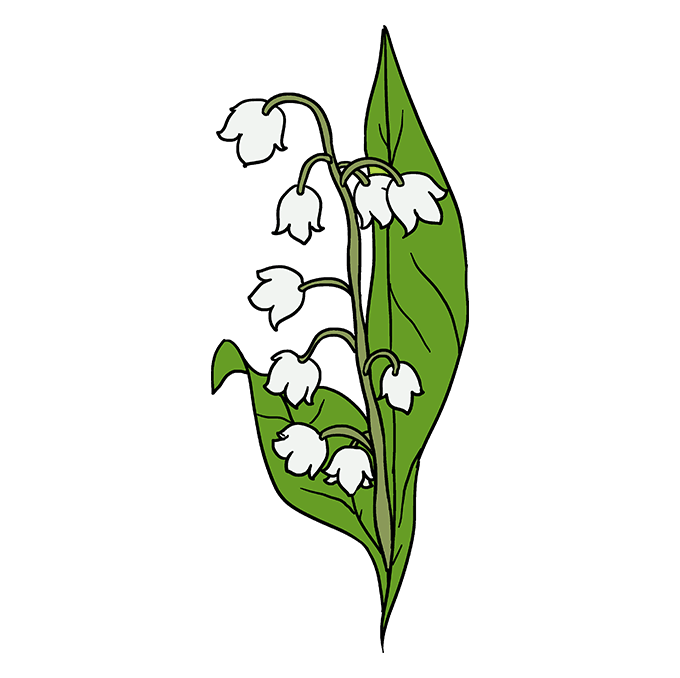 How To Draw A Lily Of The Valley Really Easy Drawing Tutorial Easy Drawings Lilies Drawing Lily Pictures