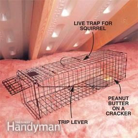 How To Keep Mice Away And Have A Mouse Free House Get Rid Of Squirrels Squirrel Keep Mice Away
