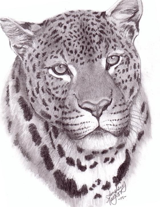 drawing jaguarjpg