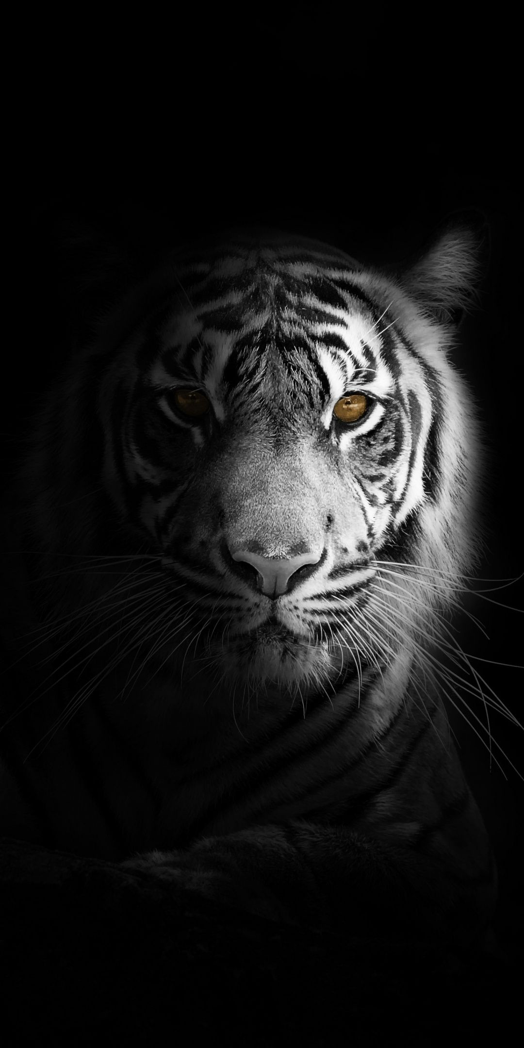 Portrait Minimal White Tiger Dark Wallpaper Tiger Wallpaper