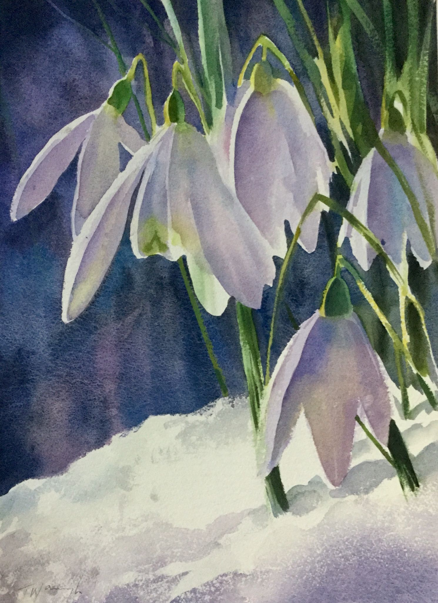 Snowdrops Watercolour By Trevor Waugh Floral Watercolor Flower Painting Watercolor Flowers