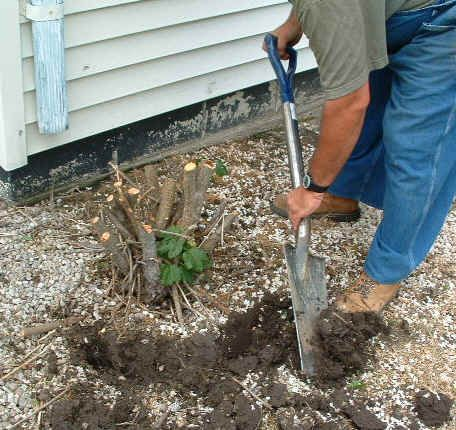 How To Remove A Small Tree Stump Removing Stumps