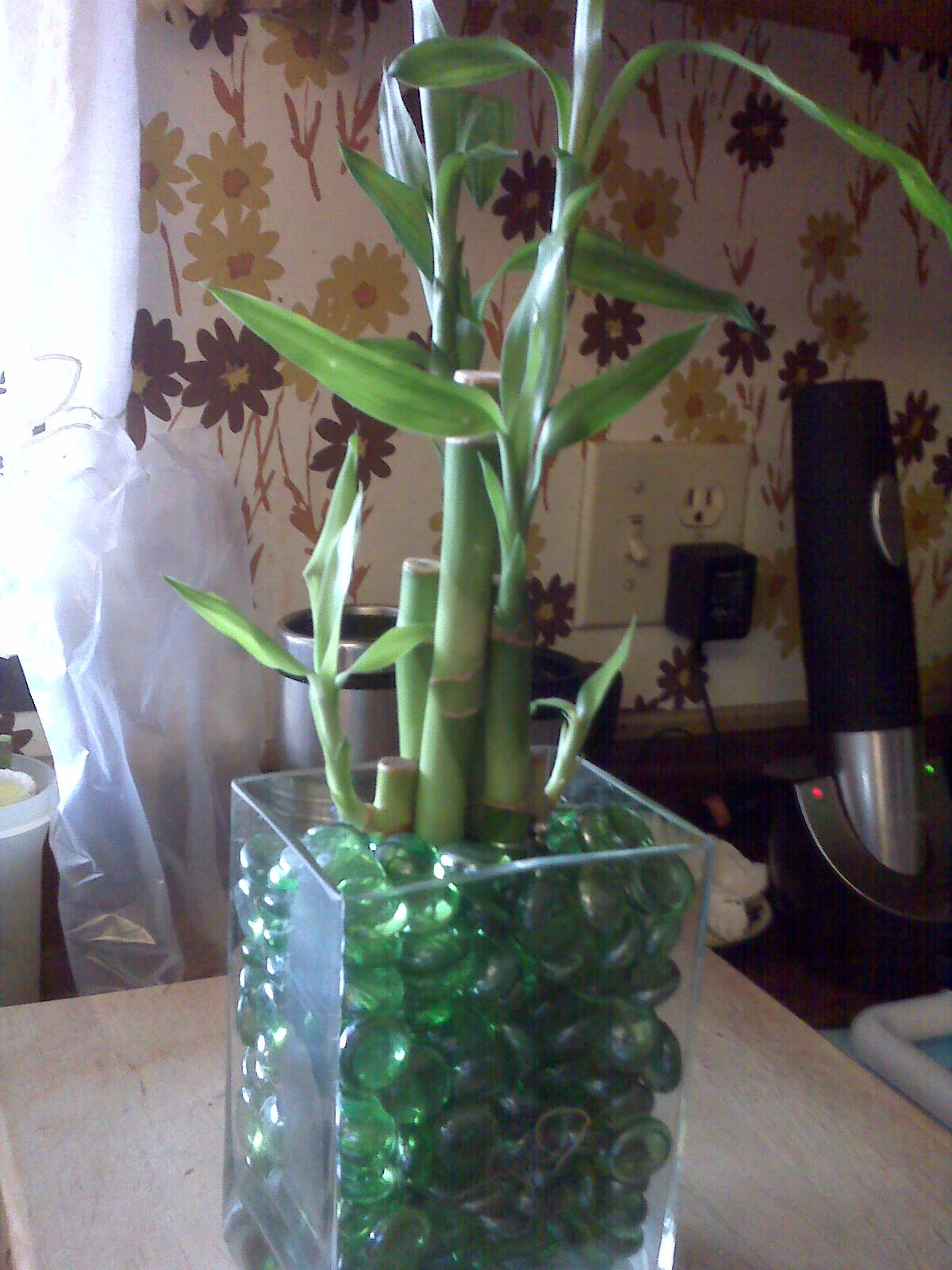 What do the colors of ribbon symbolize on lucky bamboo ehow - Today S Project Found Vase Added Pebbles And Lucky Bamboo