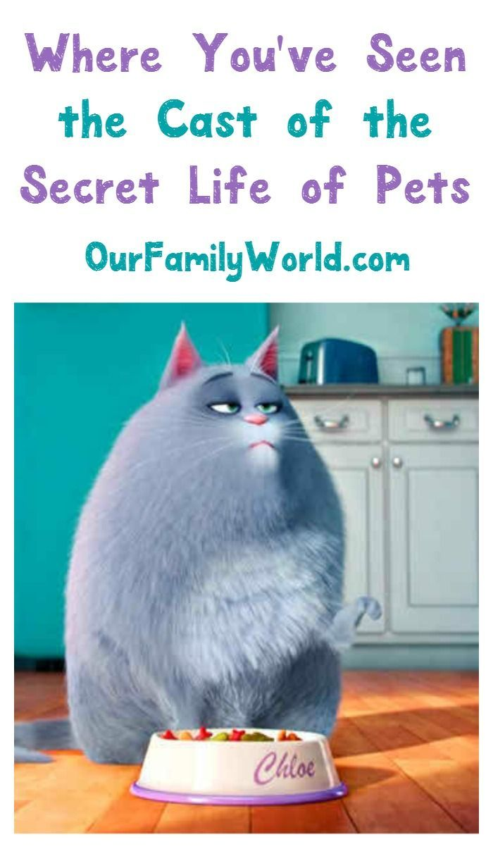 Other Movies Starring The Cast Of The Secret Life Of Pets Secret Life Of Pets Secret Life Family Entertainment Ideas