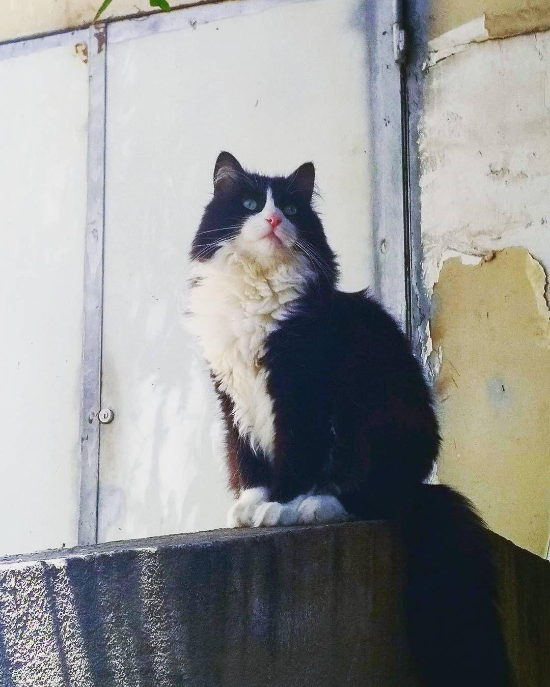 Mr Cat Chat Chatparisien