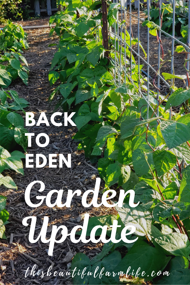 Our Deep Mulch Back to Eden Garden Update is part of Garden mulch, Organic gardening tips, Mulch for vegetable garden, Garden of eden, Organic gardening, Healthy garden - THAT'S RIGHTS   OUR DEEP MULCH BACK TO EDEN GARDEN HAS TRULY BEEN AMAZING! IT NATURALLY CONSERVES WATER AND THERE TRULY IS NO WEEDING!