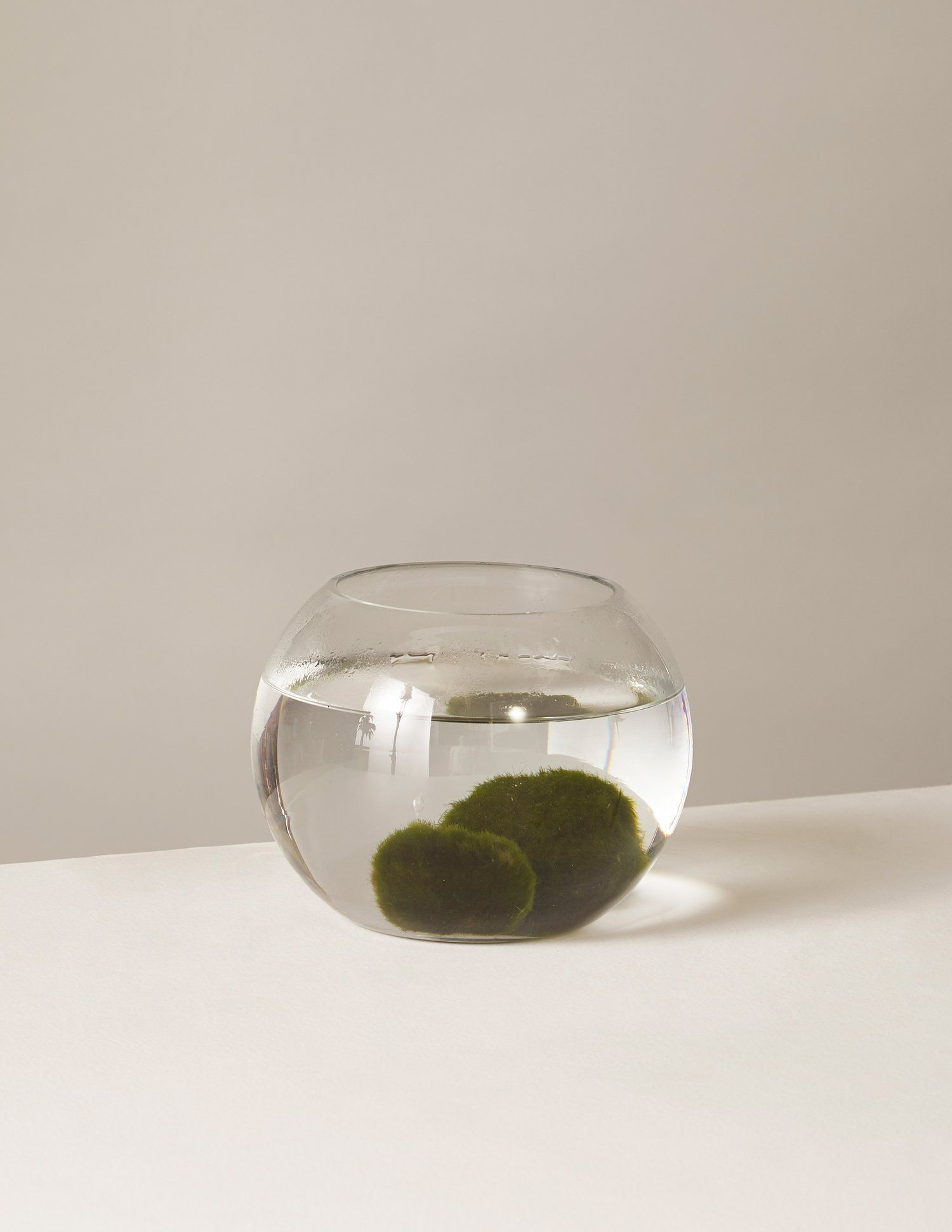 Marimo Moss Ball Kit Marimo Moss Ball Marimo Low Light Plants