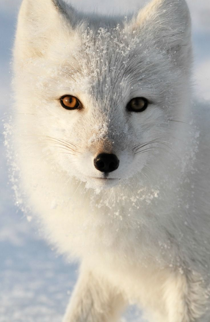 Which Winter Animal Are You?