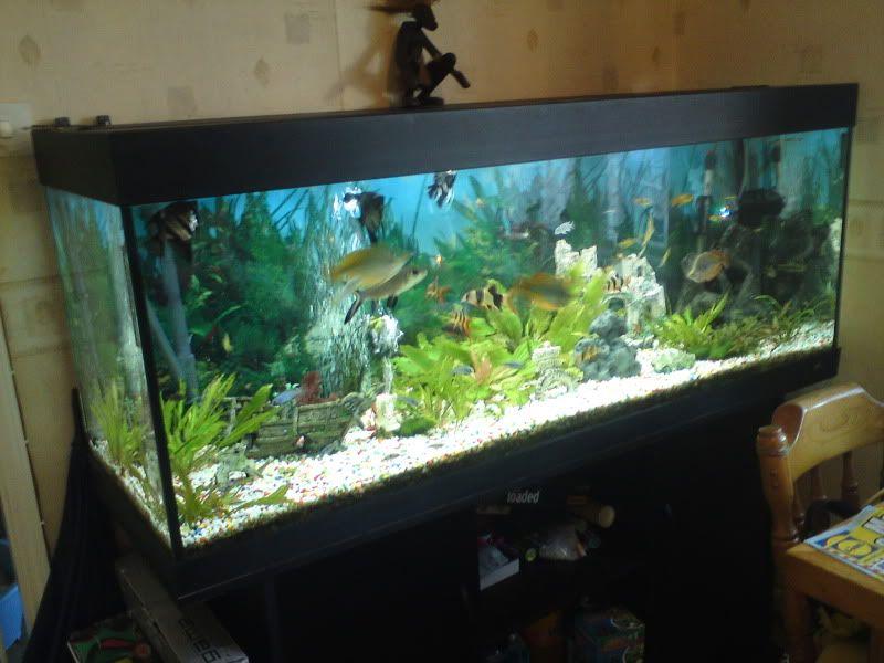 Picture Of Fish Tank With Black Gravel Juwel Rio 400 Aquarium Stand 5 Ft Complete Setup 400li