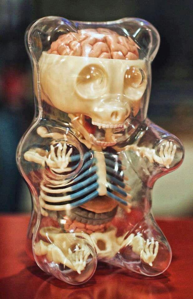 Anatomía de un oso de gomita. | Objetos | Pinterest | Ositos de goma ...