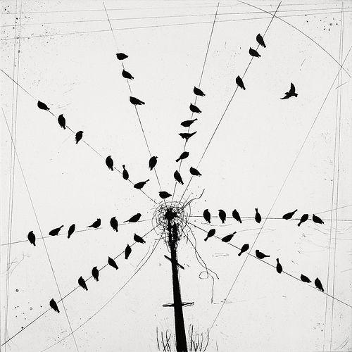 Star Of Starlings Art Illustration Art Prints