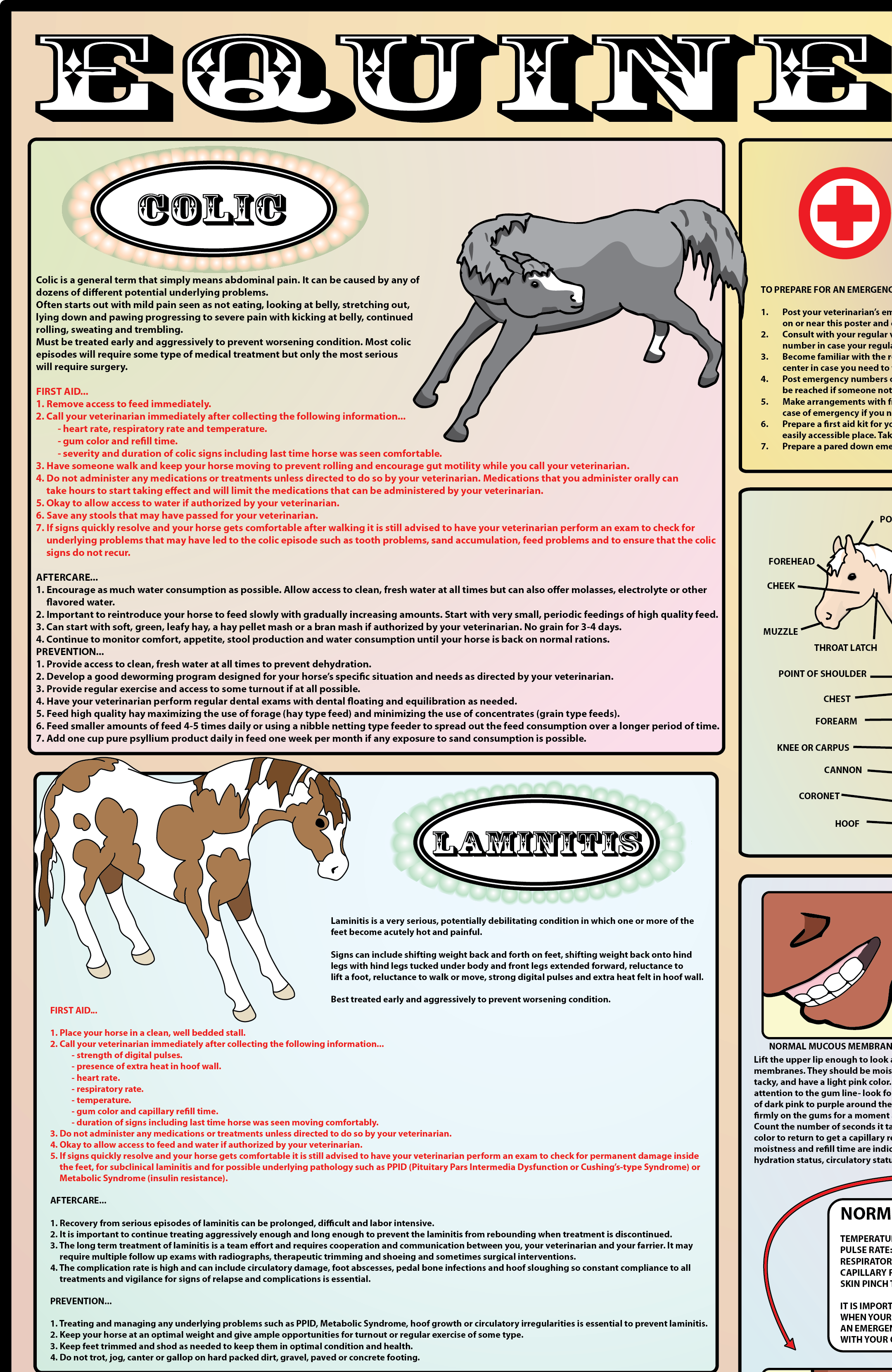 Pin On Horse First Aid [ 3322 x 2160 Pixel ]