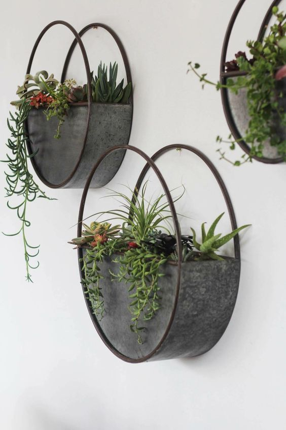 Hanging Plants Ideas For Home Decor