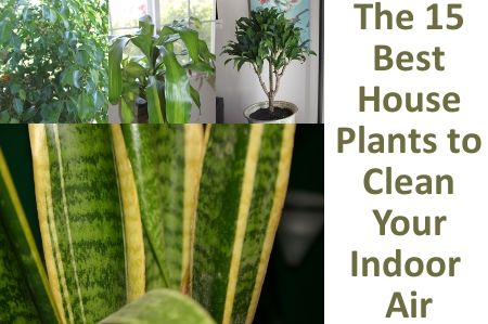 15 plants to clean your air nasa s list indoor air for Nasa indoor plant list