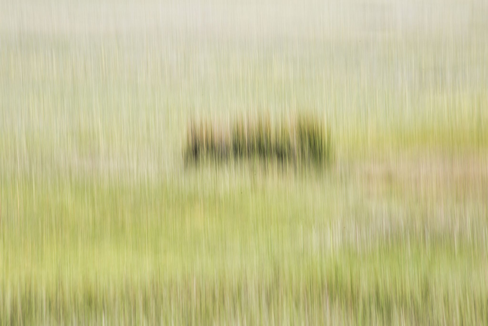 Coastal Grasses #3 by Ed Morris on 500px