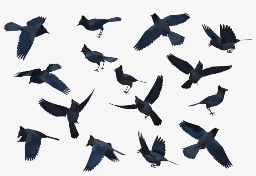 Download Bluejay Drawing Stellar Jay Png Library Stock Blue Jay Silhouette Png Image For Free Search More Creative Png Reso Blue Jay Silhouette Png Drawings