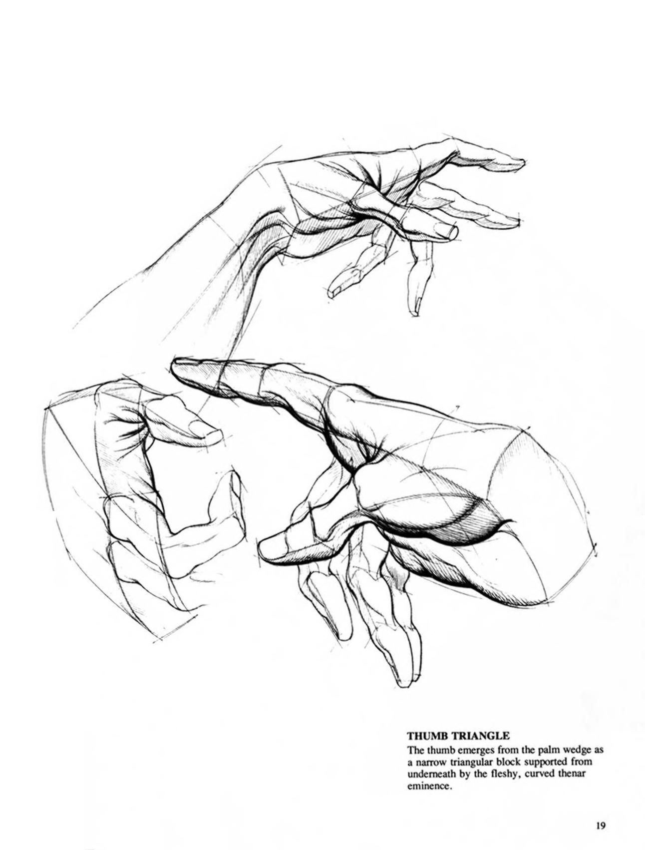 Burne Hogarth Drawing Dynamic Hands Anatomy Sketches Figure