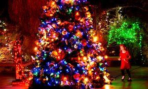 8029d84806dbcd58bb8108e2bbde5c97 - Wildlights The Living Desert Zoo And Gardens December 31