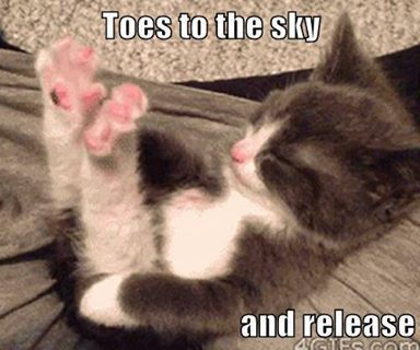More cat storie