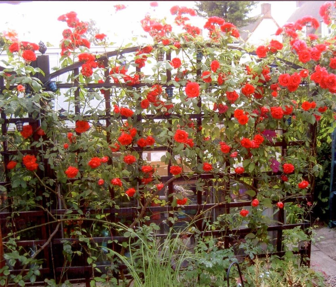 For Your Front Yard Design With Red Rose English Garden Trellis