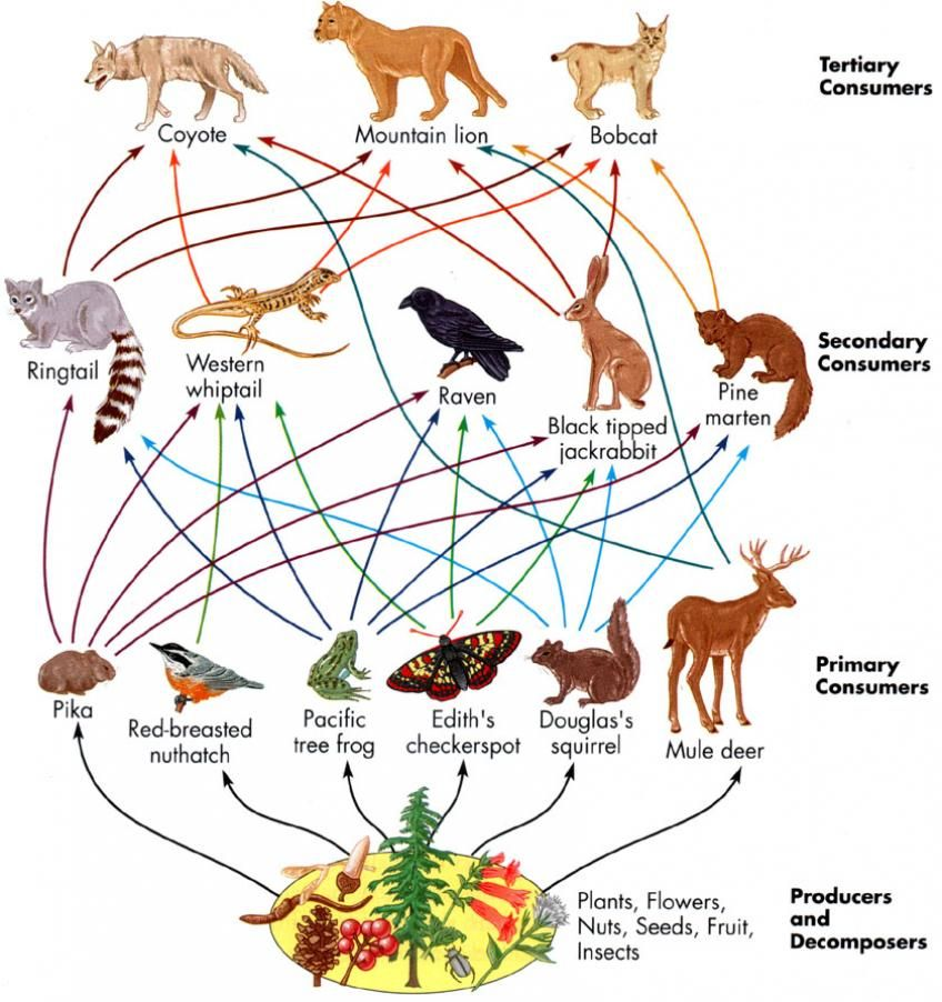 This is a food web. The food web shows the energy flow