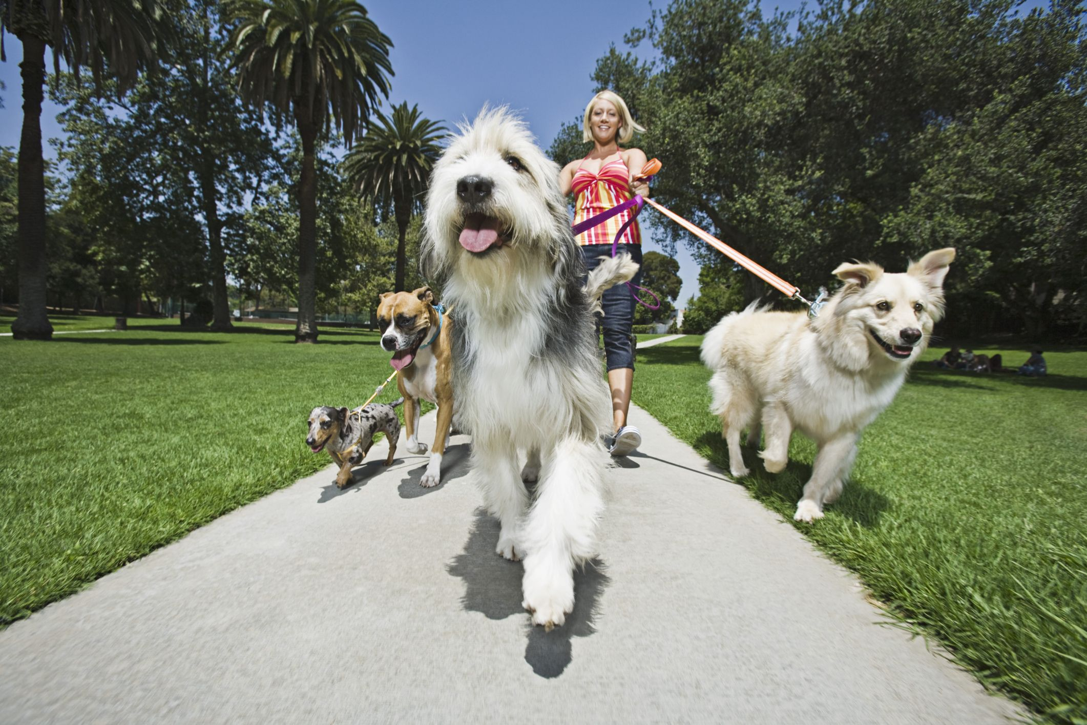 Do You Know The Top 10 Hobbies That Can Pay Off Find Out The Top 10 Hobbies That Can Pay Off In This Article From Howstuffworks Com Dog Friends Pets Animals