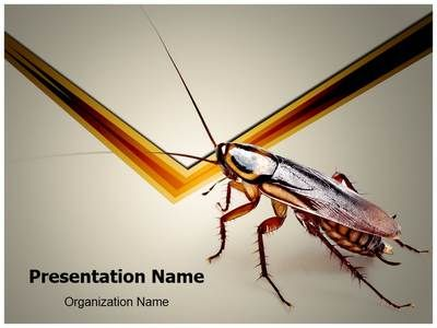 Cockroach Powerpoint Template is one of the best PowerPoint
