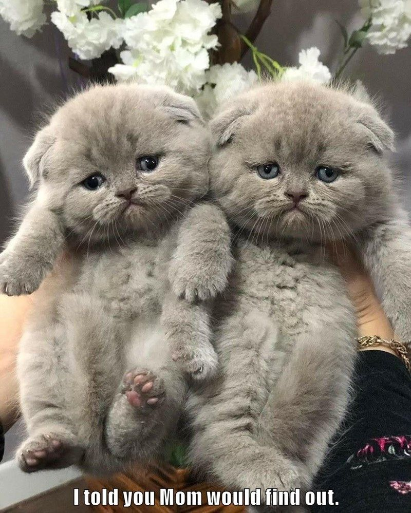 I Told You Mom Would Find Out In 2020 Cats Silly Cats Animals