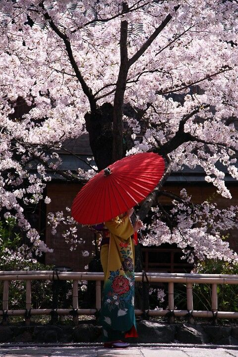 Pin By Quixot On Random Photos Japanese Art Cherry Blossom Japan Cherry Blossom