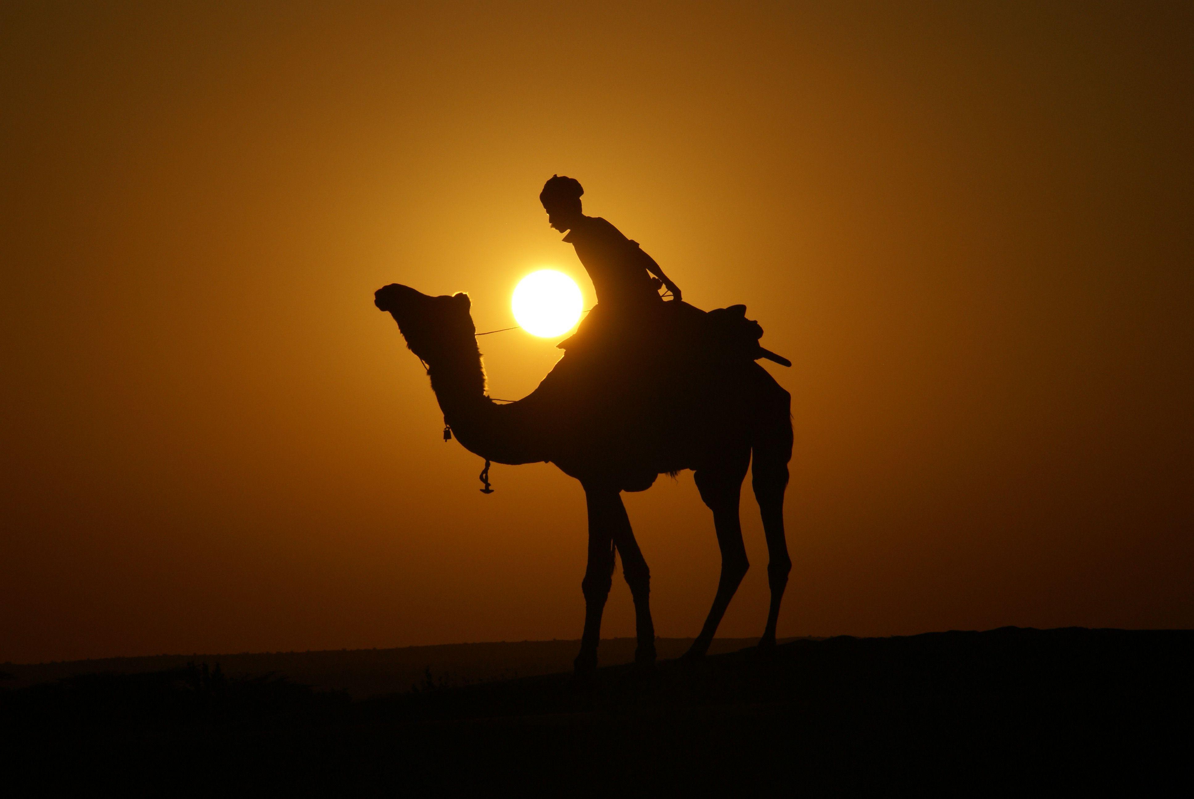 Thar Desert sunset, Rajasthan | Rajasthan | Pinterest ...