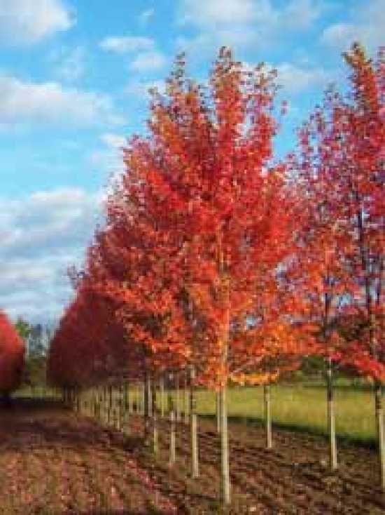 Landscape Garden Own Your