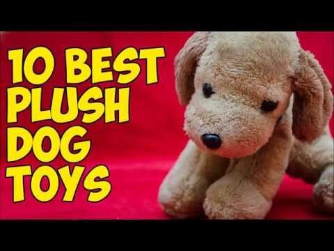 Info's : 10 Best Plush Dog Toys 2019